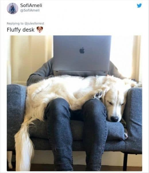 dog acting as desk